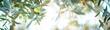 canvas print picture - Panorama von reifen Oliven am Baum