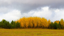 Colorful Autumn Landscape With Yellowed Birch Trees And Green Fir-trees With A Grey Sky Covered With Low Clouds. Indian Summer In Russia. Forest At The Edge Of The Field