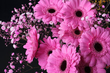 Bouquet Of Pink Gerbera Daisies On A Black Background. Pink Blooming Gerbera With Small  Flowers Isolated On Black.