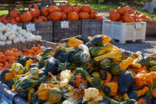 Large Wood Bins Of Various Autumn Pumpkins And Gourds At The Farm Market