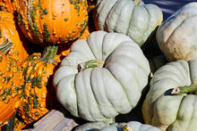 Pile Of Unique Green And Bumpy Pumpkins For Sale At The Farm Market