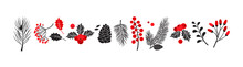 Christmas Vector Plants, Holly Winter Decor, Christmas Tree, Pine, Leaves Branches, Holiday Set Isolated On White Background. Red And Black Colors. Vintage Nature Illustration