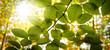 canvas print picture - Herbstwald bunt mit Ast und Blättern im Gegenlicht. Sonnenstrahlen farbenfroh