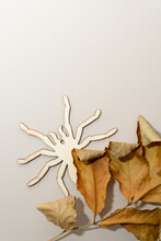 Dried Leaves On A Beige Background With Wooden Laser Cut Spider