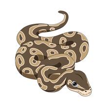 Cute Snake Cartoon On White Background