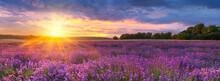 Berautiful Summer Sunset Over Lavender Field