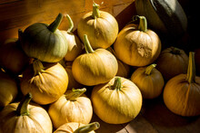 Autumn Harvest. Small Yellow White Pumpkins On A Wooden Background.