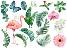 Watercolor Set With Tropical Leaves, Flowers And Birds. Illustration Plumeria, Orchid, Hummingbird And Flamingo