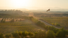 Red Tailed Hawk In Flight At Dusk, Temecula, California, USA