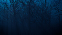 Halloween Scene With Haunted Moonlit Trees.