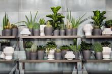 Assorted Succulents In Monochromatic Grey Flowerpots On Shelves