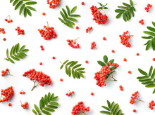 Pattern Of Ripe Rowan Berries Or Red Mountain Ash And Green Leaves Isolated On White