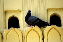A Pigeon Spotted On Concrete Beam Hole