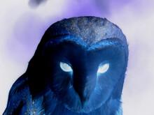 Enigmatic Screech Owl