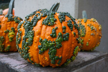Warty Goblin - A Hard Shell Pumpkin, With Warts Remaining Green For Several Weeks After Harvest.