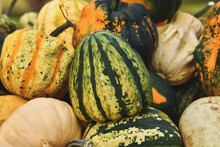 Green Striped 'Flat Striped' Gourd On Pile Of Many Different Ornamental Pumpkins
