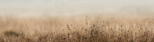 Long Grass Up Close In English Meadow With Diffused Background