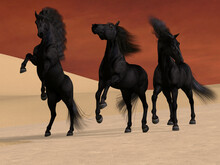 Three Black Horses - Three Friesian Black Stallions Stay Together In A Desert Landscape.