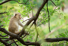 Monkey Relaxing In The Trees In The Tropical Forest.