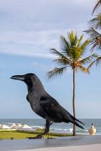 Raven At Galle Face Area Beach Resort In Colombo Sri Lanka