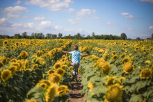 Happy Child Field Freedom And Happiness Concept On Sunflower Outdoor. Kid Having Fun In Green Spring Field Against Blue Sky Background. Healthy And Active Lifestyle Concept