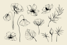 Set Of Flowers, Leaves, Leaf, Buds Hand Drawn Vector Sketch. Hand Drawn Ink Floral Line Drawing. Wild Flowers Minimalist Design. Black And White Art. Abstract Floral Illustration.