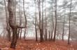 Leinwandbild Motiv Fog in the forest