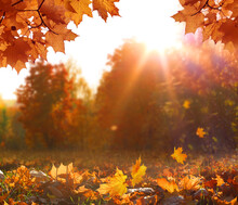 Colorful Forest In Sunlight. Autumn Landscape With Trees And Sun. Beautiful Foliage In The Park. Falling Leaves Natural Background
