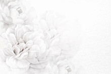 Flower Background White Border Vector, Remixed From Vintage Public Domain Images