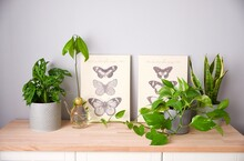 Home Garden. Composition Of Lot Of Different Plants, Monstera, Avocado, Photos And Sansevieria With Two Picture With Butterflies On A Wooden Table