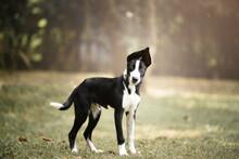 Mixed Breed Shelter Dog