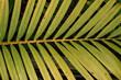 Zielone naturalne piękne tło roślinne, deseń liści.
