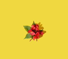 Creative Patern Red Flower And Yellow Background.  Minimal Concept.