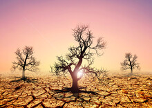 Drought Areas Have Dead Trees. Concept Of Global Warming, Change And Environment.