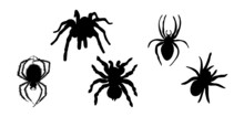 Vector Illustration. Black Silhouette Of A Spider On A White Background.