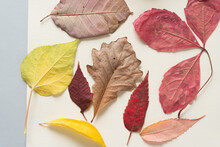 A Variety Of Autumn Leaves On A Light Background
