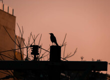 Low Angle Shot Of A Silhouette Of A Crow On A Wall Of A Building At Sunrise