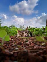 Tabby Cat Lying On The Ground Against A Cloudy Sky