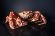 Boiled Hairy Or Horsehair Crab, Selective Focus
