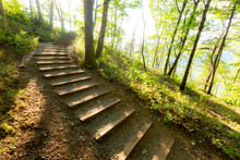 Wooden Steps At An Incline Through Forest