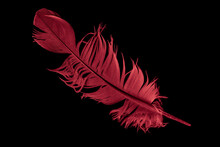 Red Bird Feather On Black Isolated Background