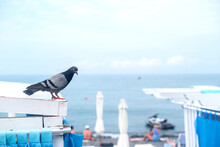 The Dove Sits On The White Roof Of The Gazebo By The Sea Beach. Summer Vacation Concept On The Beach.