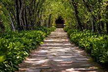 Lush Green Gardens In Akron, Ohio