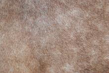 Brown Horse Fur Texture Closeup. Furry Abstract Backdrop, Soft Selective Focus