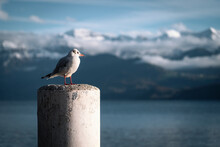 A Gull Sitting On A Mast With A Mountain Range And A Lake In The Background