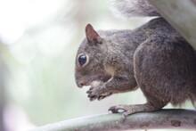 Esquilo Catinguele