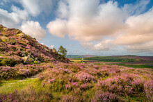 Summer Time Moorland View With Bracken And Heather In Full Bloom Rocks And Hills In The Background Cloudy Sky