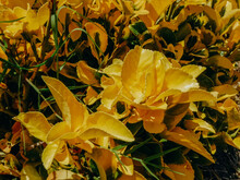 Bright Yellow Leaves And Plants In Sunlight