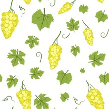Bunches Of Grapes. Branches With Yellow Berries On A Dense Bush. Young Vineyard. Sweet Autumn Harvest. Seamless Pattern. Isolated On White Background. Vector.