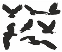 Vector Set Of Silhouettes Of Owls. Flying And Sitting Nocturnal Birds. Rodent Hunter Shadows